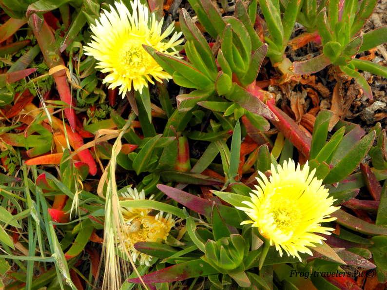 Цветы-суккуленты