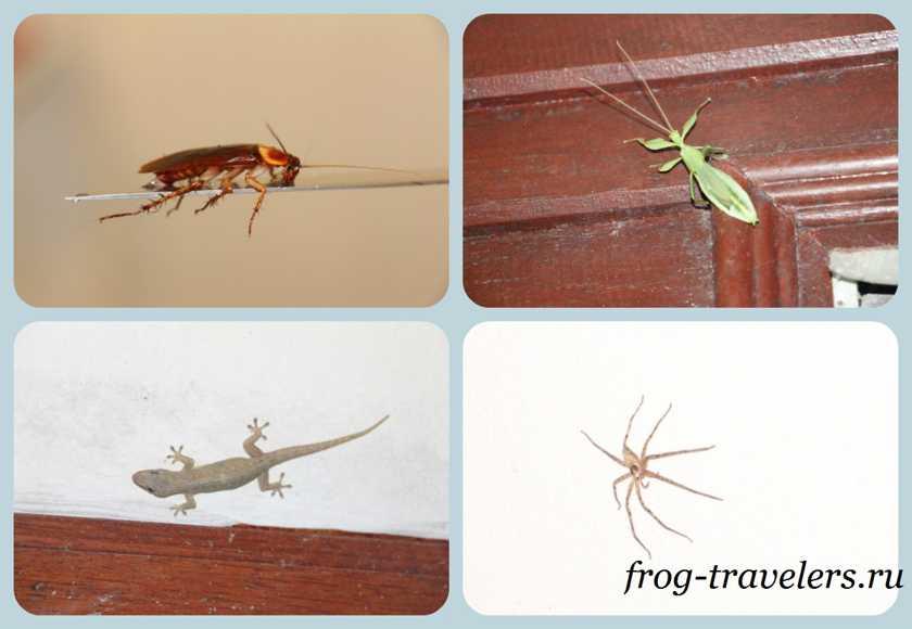 Жуки и насекомые в домах Тайланда