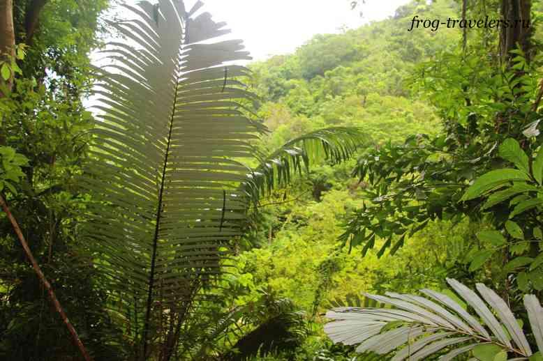 Джунгли на Самуи