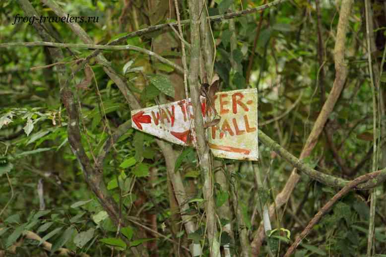 Указатель в джунглях