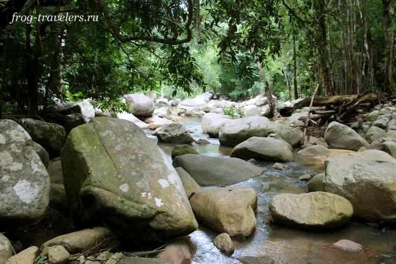 Камни в джунглях
