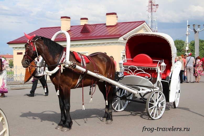 Катание в карете с лошадьми