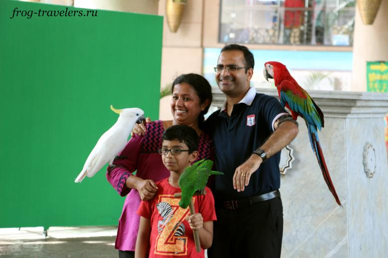 Фото с попугаями