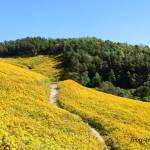 Поля и плантации северного Таиланда