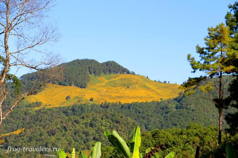 Поля подсолнухов в горах