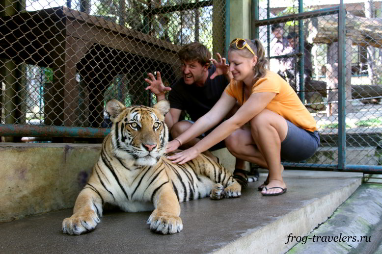 Костик и Марина Самороенко в клетке с тигром