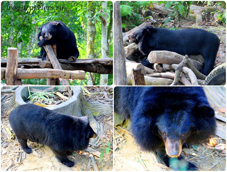 Медведи в Лаосе