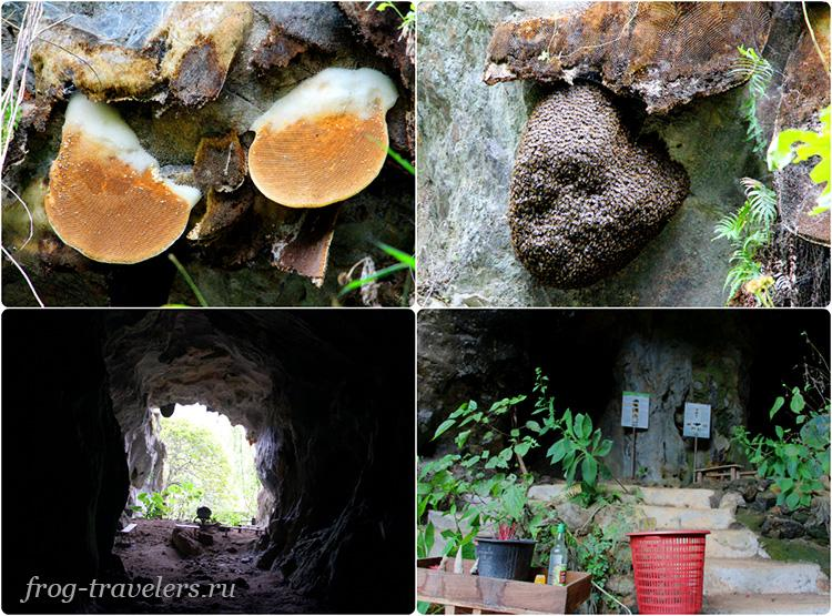 Пчелы Лаос