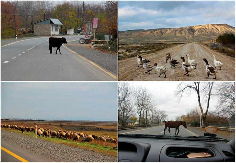 Животные на дорогах