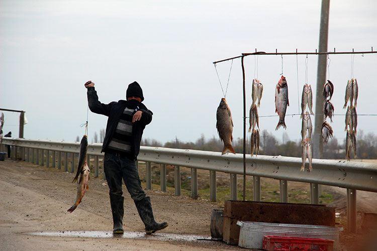 Продажа рыбы вдоль дорог