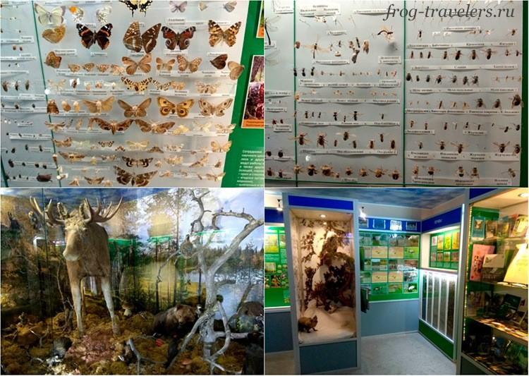 Музей Природы заповедника Кивач