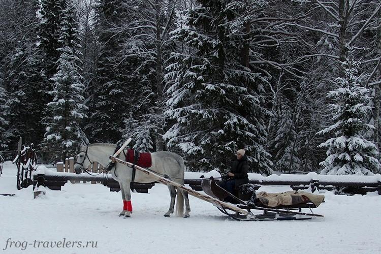 Катание в упряжке на лошади