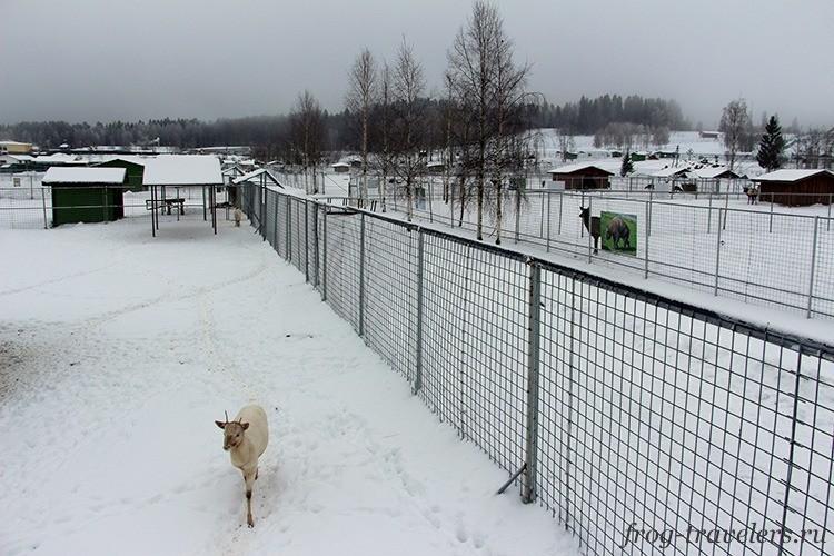 Зоопарк в Карелии зимой