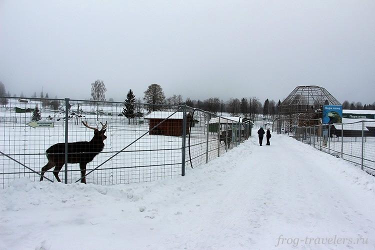 Карельский зоопарк в Киркколахти