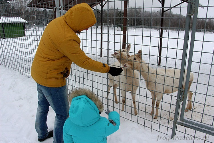 Карельский зоопарк с детьми