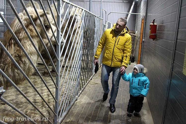 Зоопарк Карелия Киркколахти