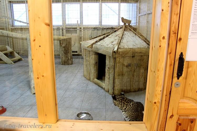 Леопард в зимнем павильоне