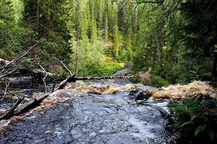 Водопад Белые мосты в Карелии – самый высокий падун Приладожья