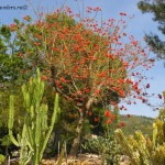 «Кактусы Альгара» – ботанический сад суккулентов и кактусов в регионе Аликанте в Испании