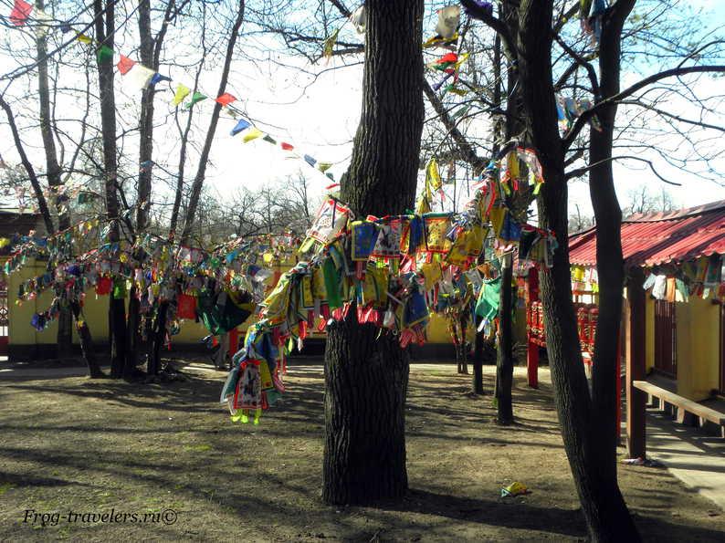 Буддийский дацан Гунзэчойнэй СПБ - расписание