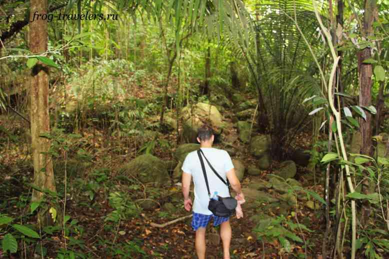 Дорогав джунглях