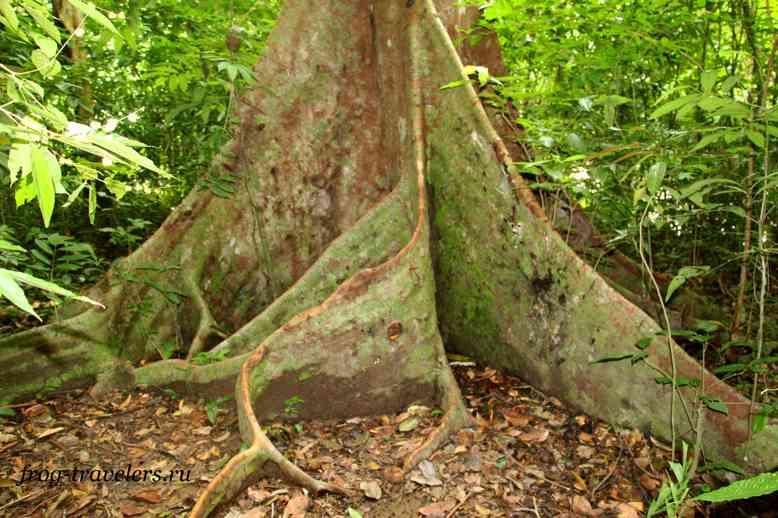 Дерево в джунглях