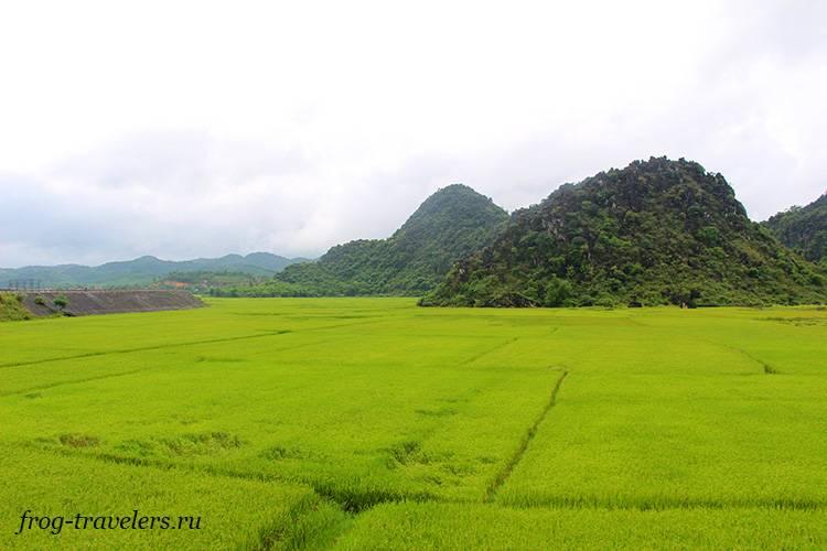 Рисовые поля в Фонгня-Кебанг